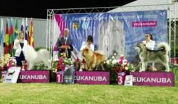 Menta Lisboa Winner 2017